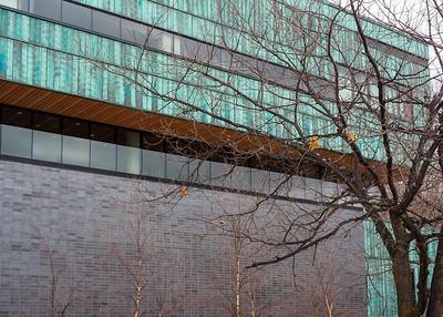Tree at University of Toronto Mississauga