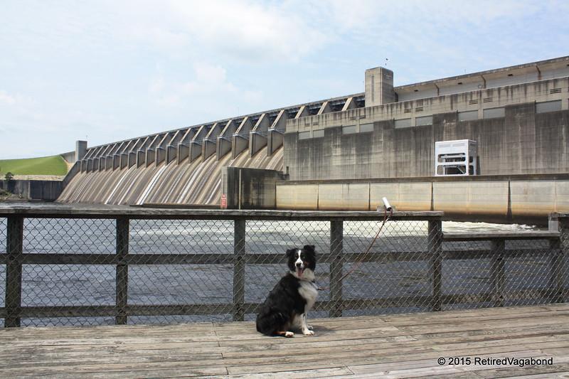 Jagger at Clarks Hill Dam Georgia