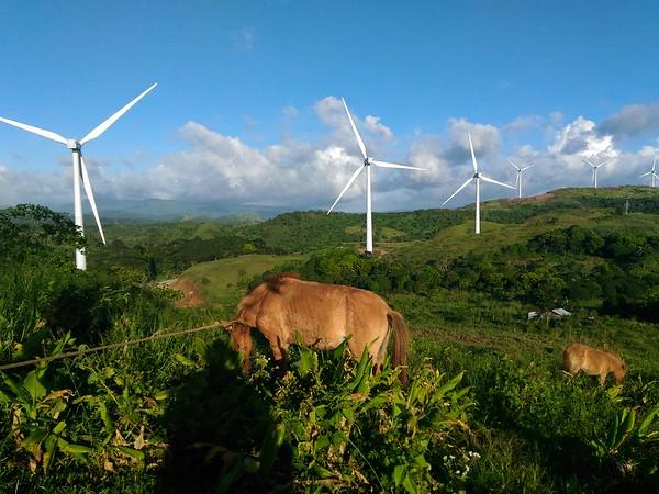 Pililia wind farm and horses