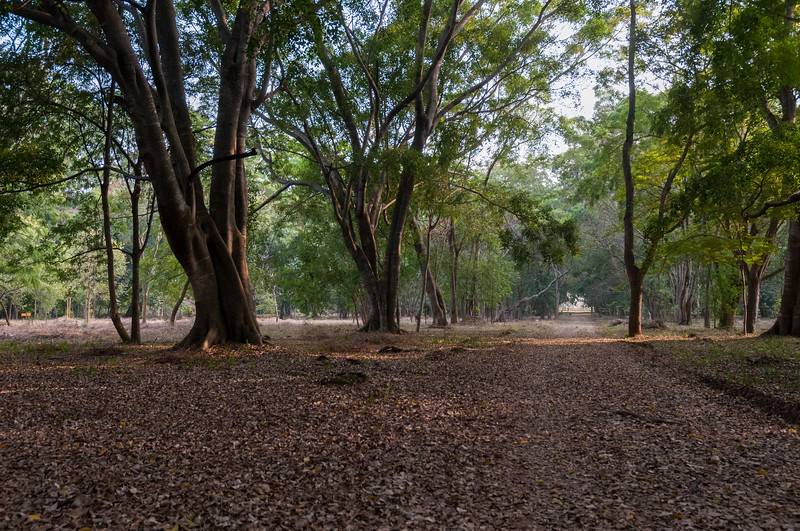 IISc central has many trees and is now clear of underbrush.