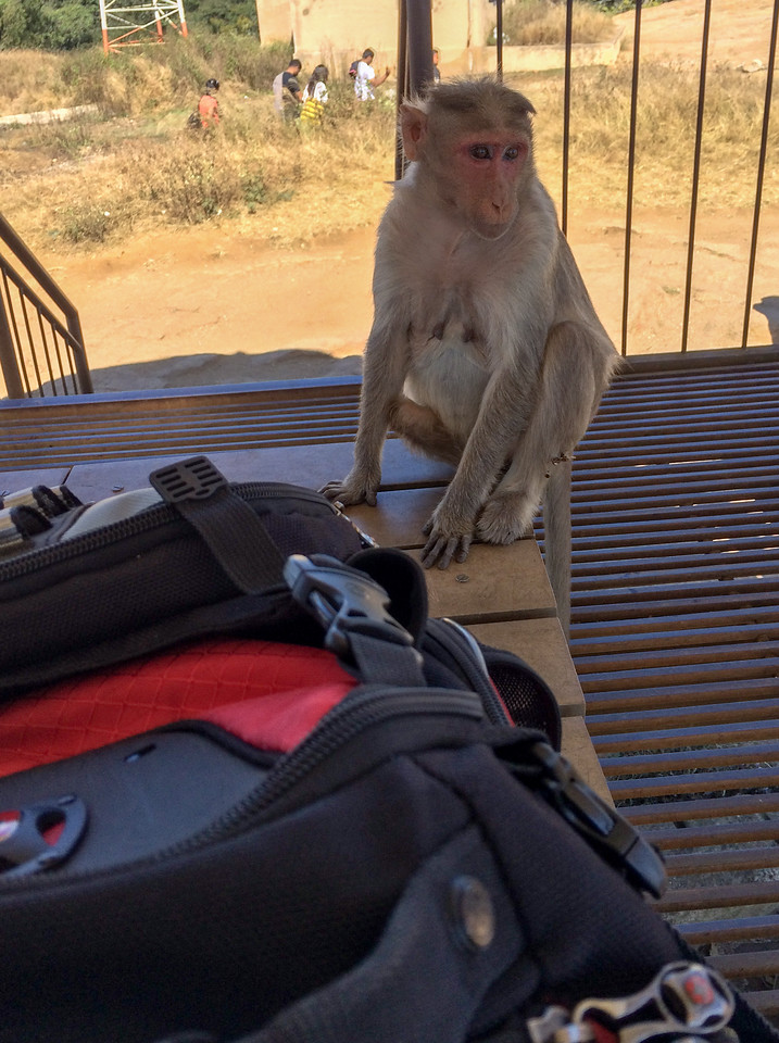 This monkey appeared within seconds of me opening my lunch.