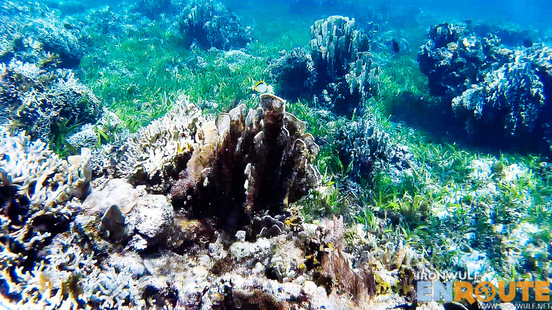 Seagrass and corals at Vuhus Island