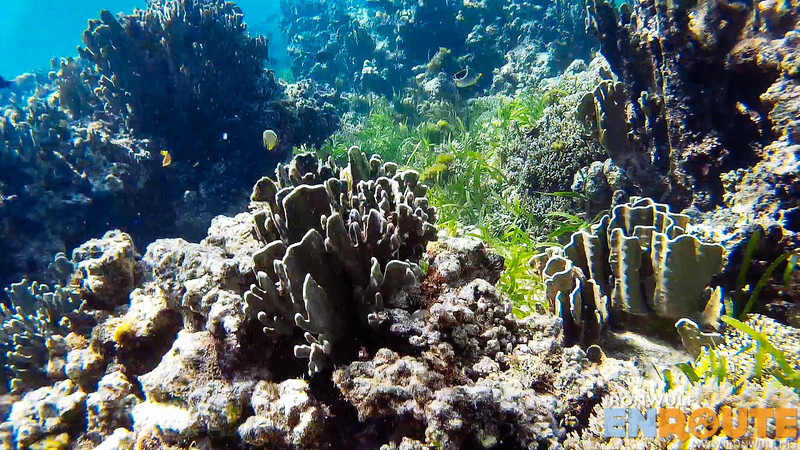 More corals and fishes
