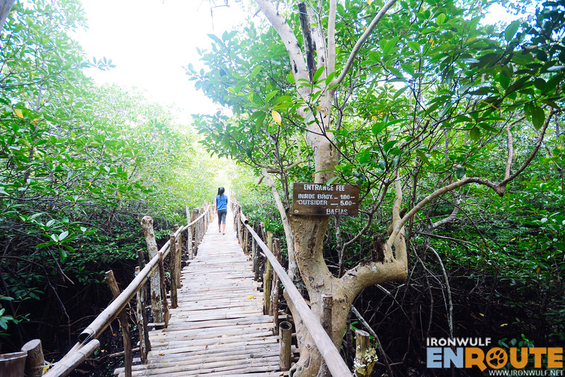 The mangrove boardwalk leading to the jetty