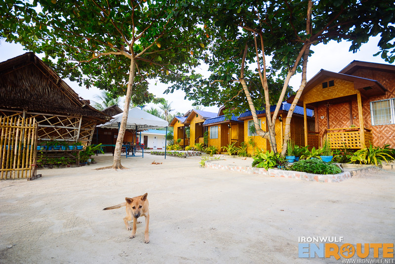 Friendly dog and the cottages