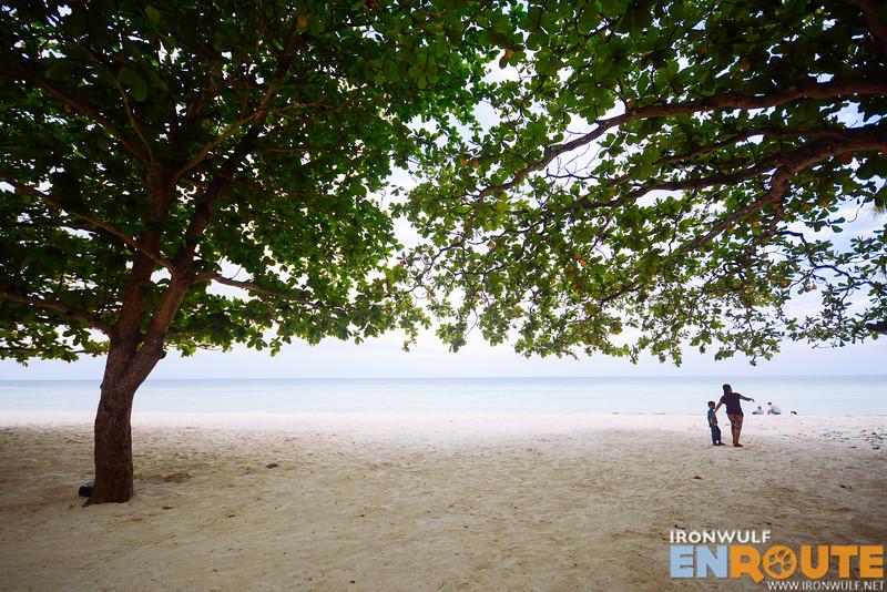 Magtalisay trees serve as natural shade
