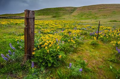 Dalles Mountain Rd April 2015