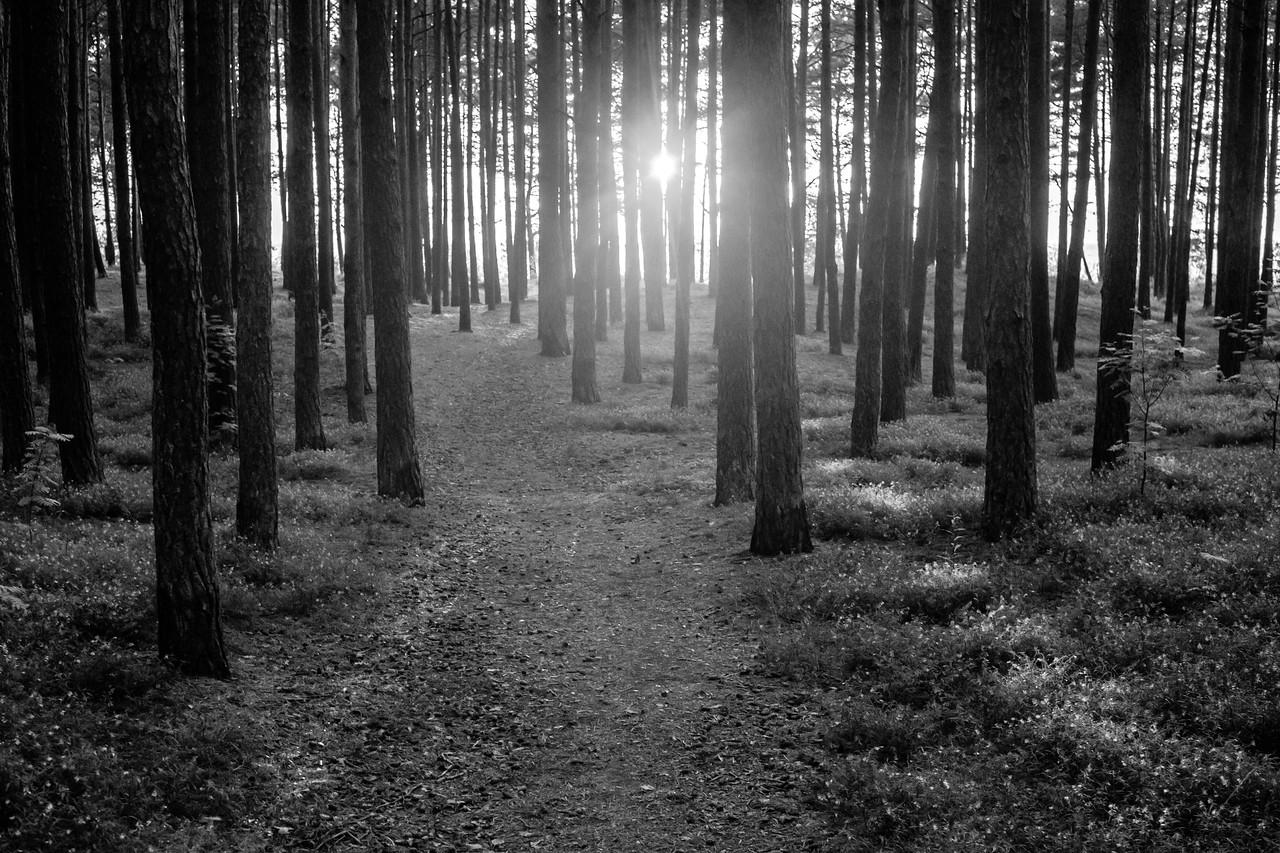 Lativan Forest