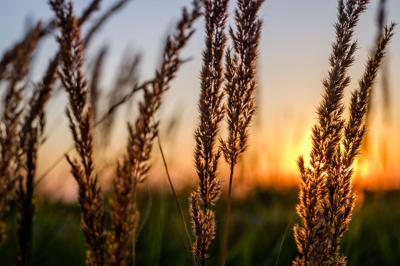 Delicate Wheat