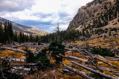 Avalanche knockdown debris on the Baker Lake and Baker Creek trail.