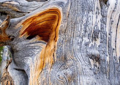 Bristlecone Pine pattern