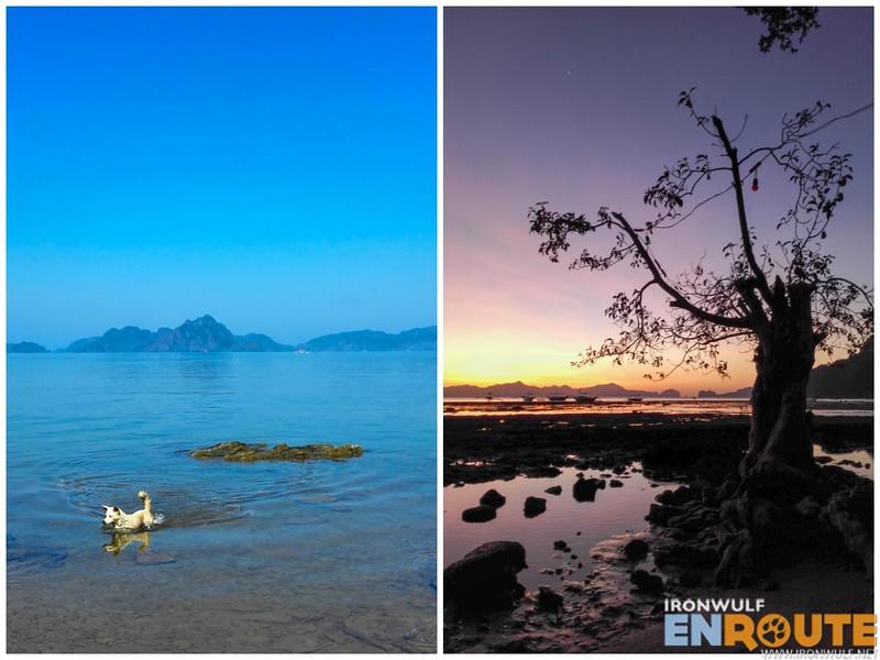 Swimming dog and Mangrove sunset