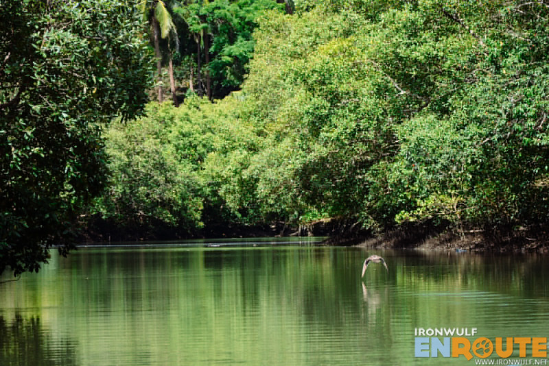 A wild duck leads the way up the 22-winding turns of Mapanique River