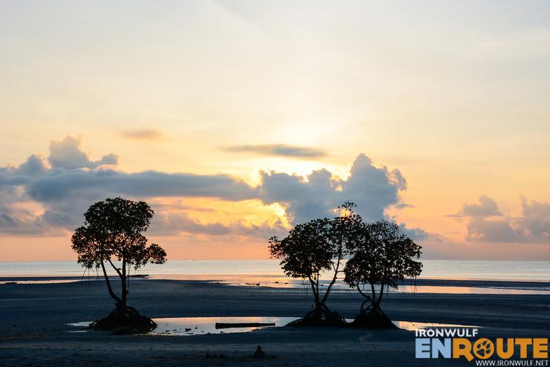The three mangroves at sunrise