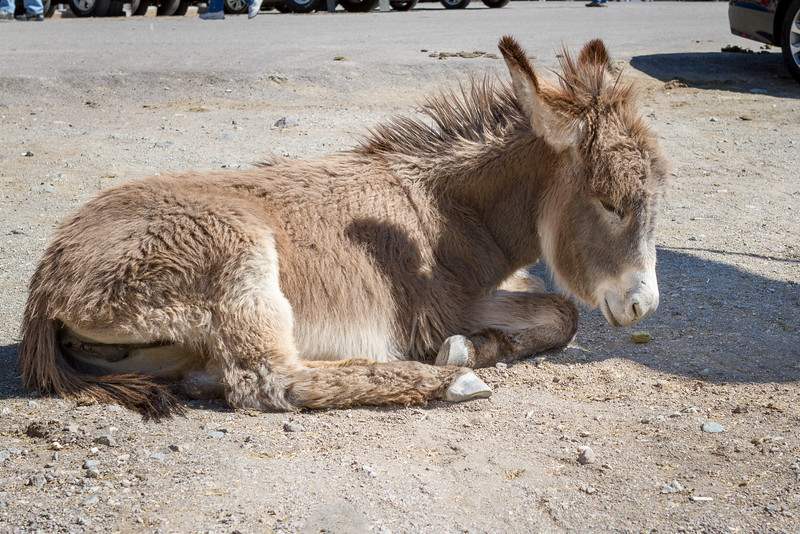 This little guy seems ready for a nap so he just lays down in the street. The burros pretty much have the run of the place.