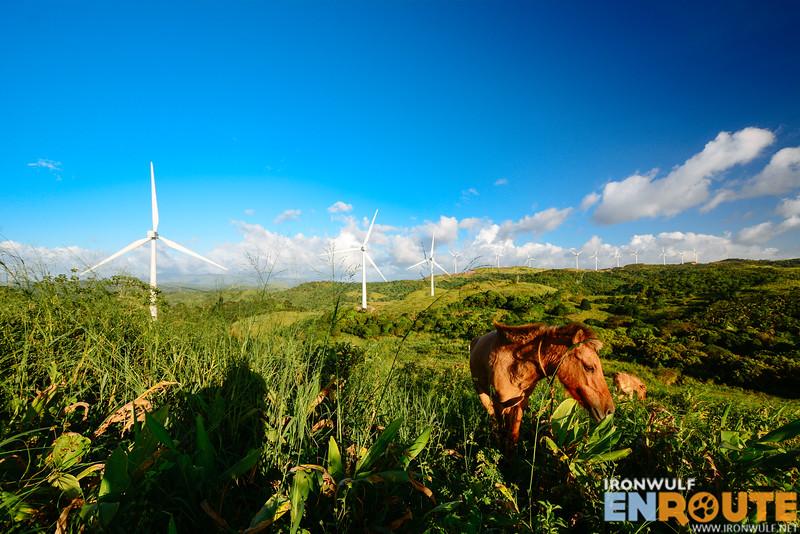 Some horses at the Pililia Rizal Wind Farm hills