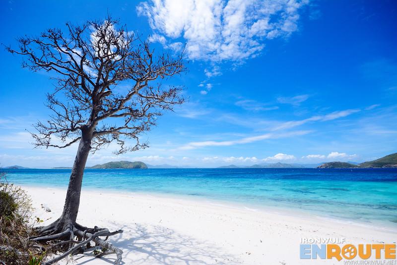 My favorite tree at Magransing Island
