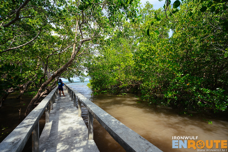 Heading to the mangrove boardwalk extending to the sea