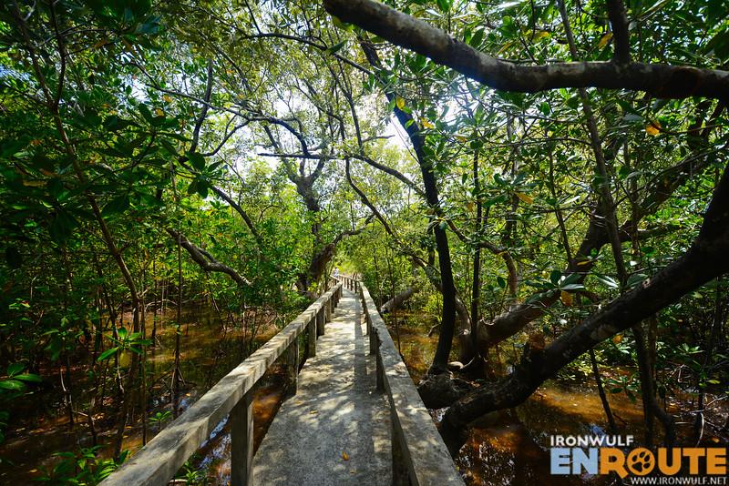 Age old mangroves at the Talabong Mangrove Park Bais