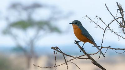 ?, Tarangire N.P., Tanzania.
