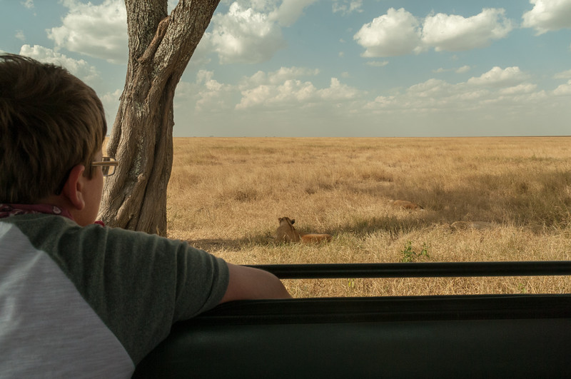 Andy watches the lions; Serengeti N.P., Tanzania.