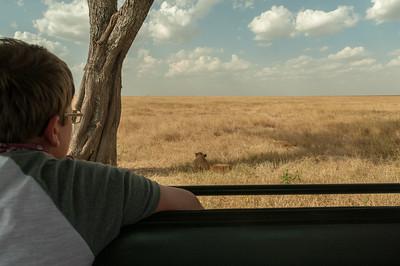 Andy watches the lions; Serengeti N.P., Tanzania.