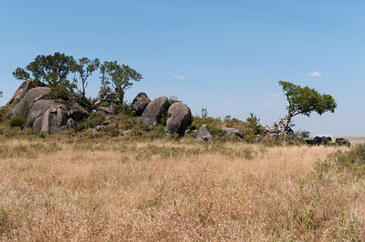 Elephants, Serengeti N.P., Tanzania.
