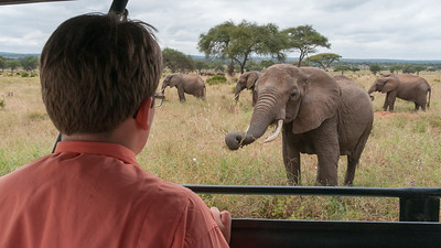 Andy watches the elephants in Tarangire National Park.