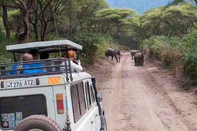 Elephants up close and personal, Lake Manyara N.P., Tanzania.