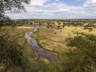 Tarangire river - Tarangire N.P., Tanzania.