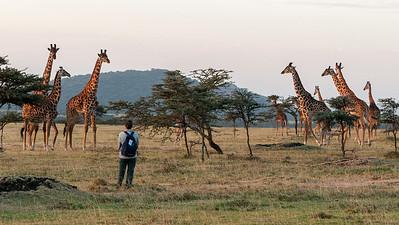 Erin creeps closer to watch the giraffes, Enashiva reserve.