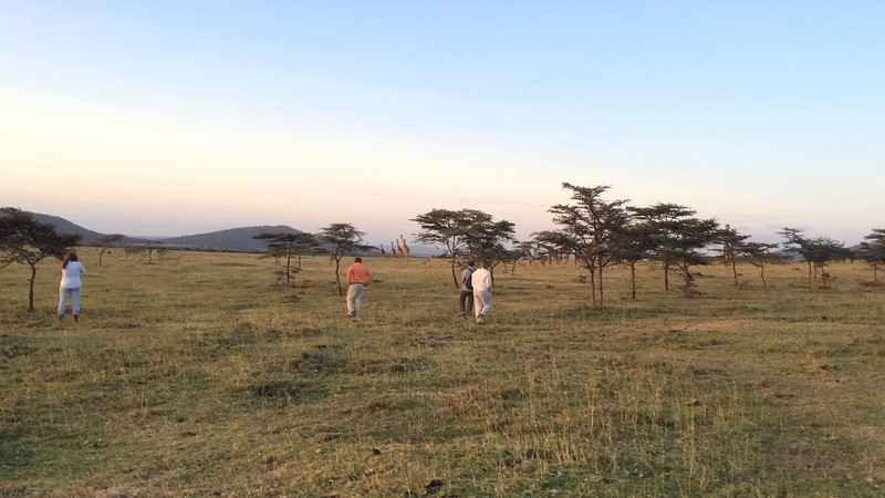 We approach the giraffes on foot... Enashiva reserve, Tanzania.