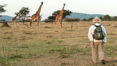 John creeps closer to the giraffes, Enashiva reserve.