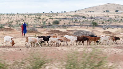A man with his herd, along the road to Tarangire, Tanzania.