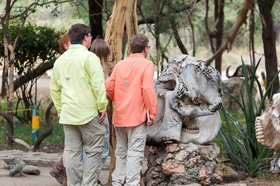 We examine elephant bones as we enter Tarangire National Park.