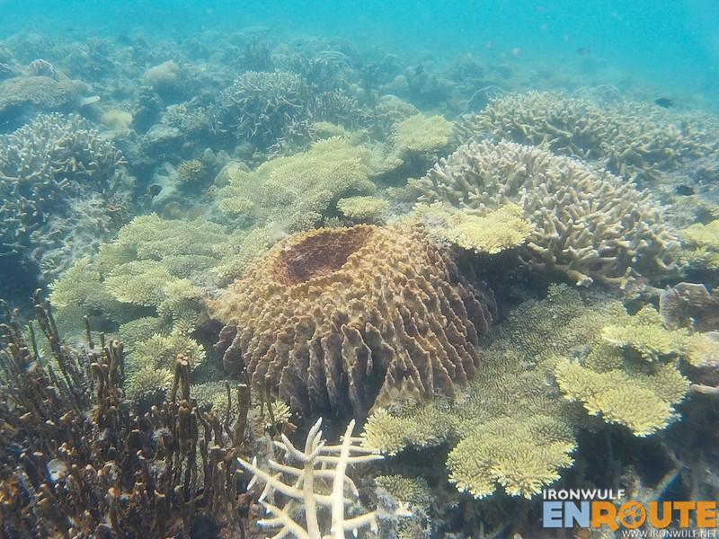 Pristine set of corals