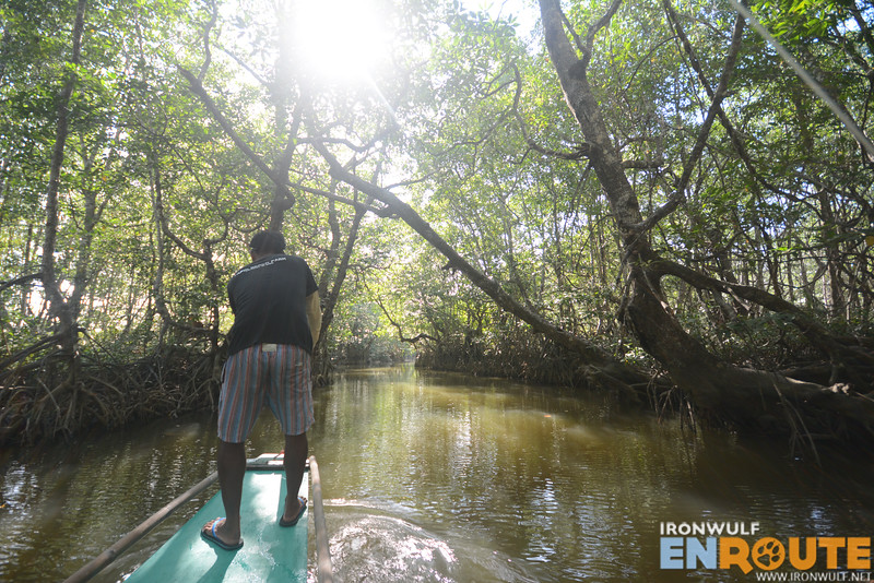 Age old mangroves
