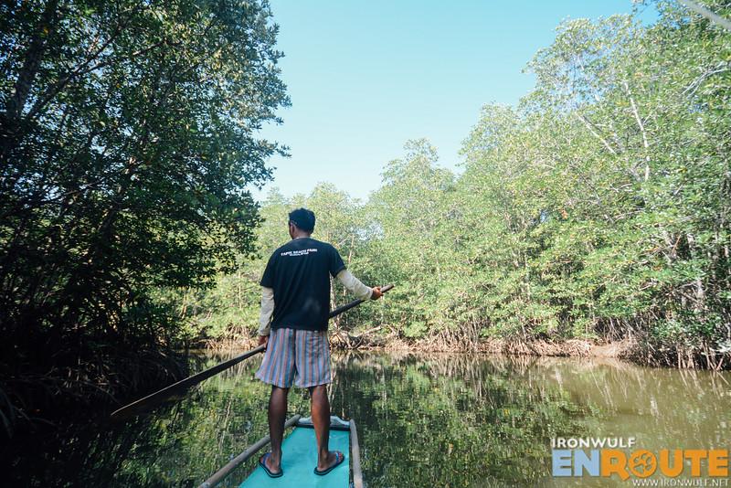 Taller mangroves deep into the river