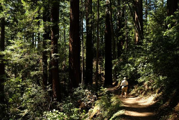 201507 Big Basin Redwoods