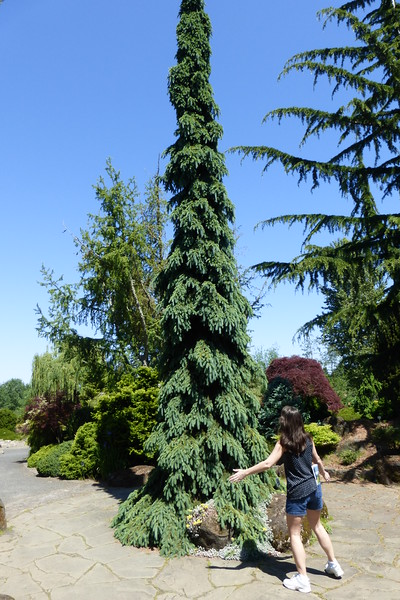"""Diane found a """"Whoville """" Tree"""