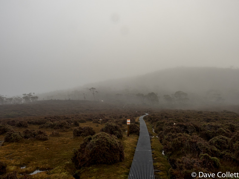 Track to Mt Ossa, Tassie's highest peak. Doesn't look like much of a view at the top!