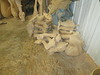 A pile of legs & necks, waiting to be carved and attached