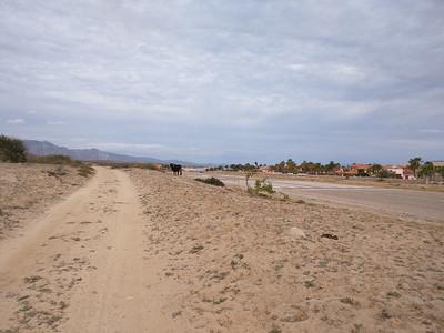 El toro at edge of runway. Road @ east of runway
