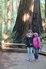 Muir Woods, San Francisco