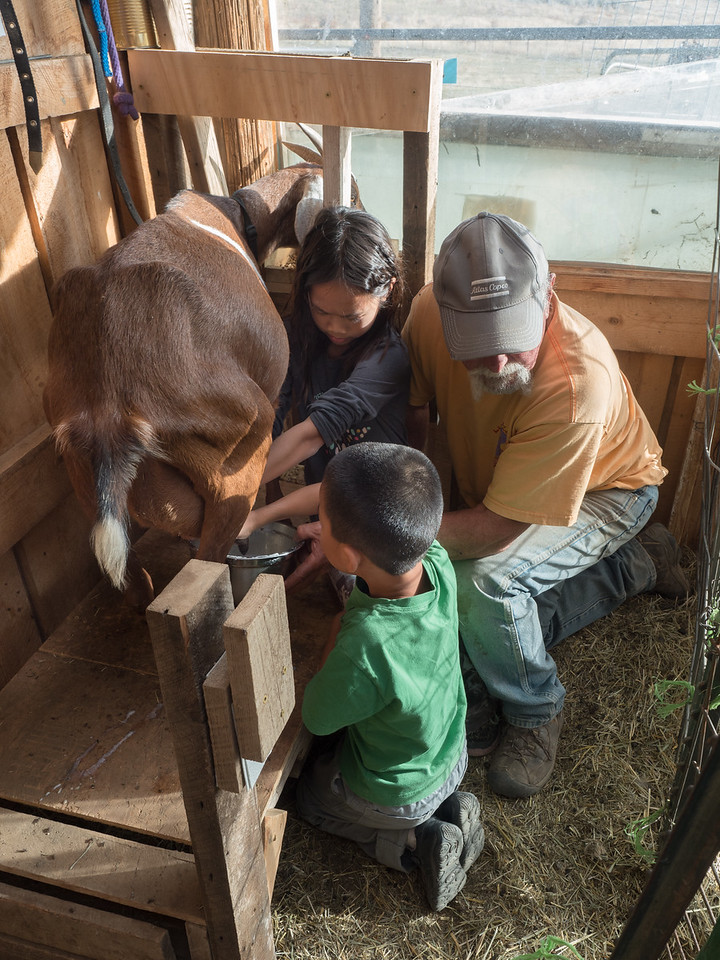 Roy Brown showing Lindsay and Nolan how to milk a goat.