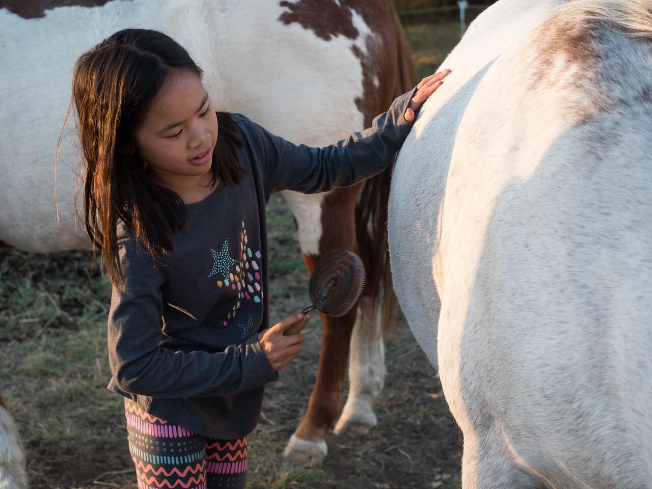 Lindsay brushing the horses.
