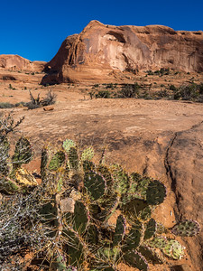Prickly pear cactus along the Corona Arch trail.