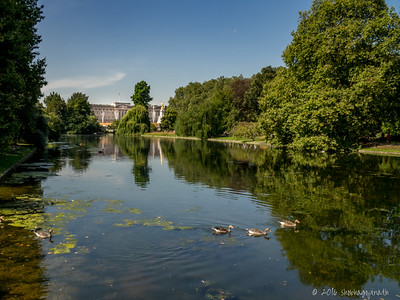 Buckingham Palace from St James' Park