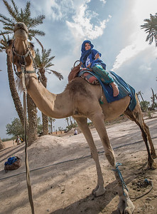 Maya on the Camel