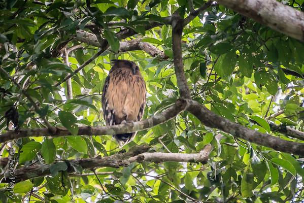 BIRD - Owl-5025
